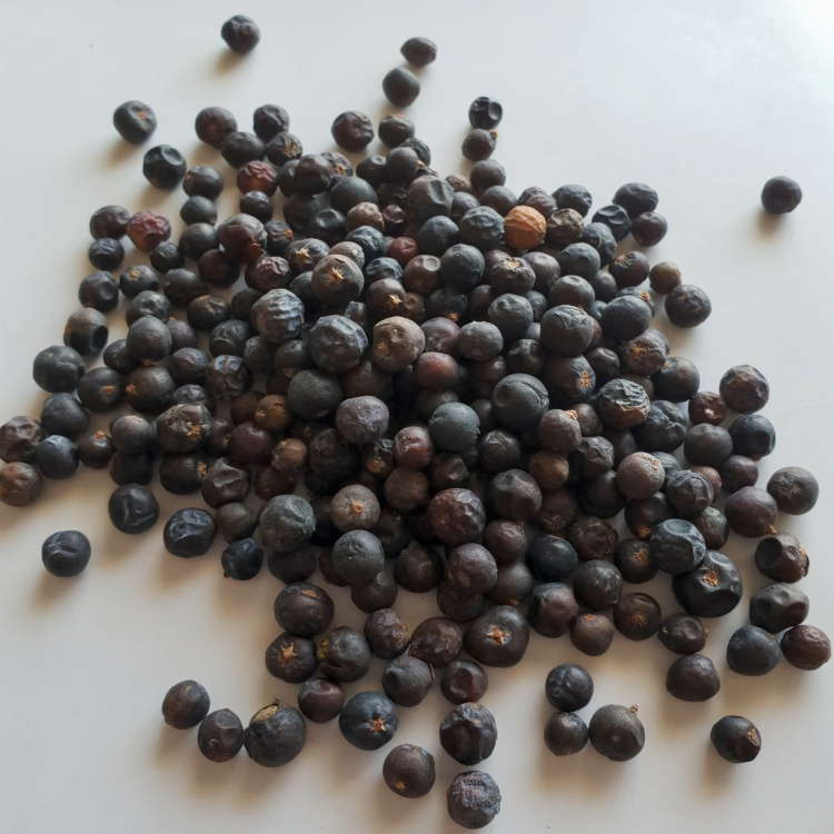 Juniper (Juniperus communis) Berry